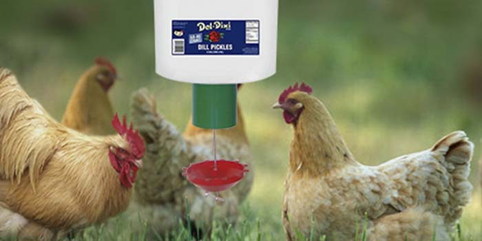 demand feeder for chickens