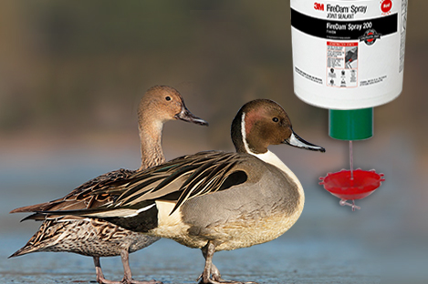Northern Pintails Duck Using Automatic Duck Feeder