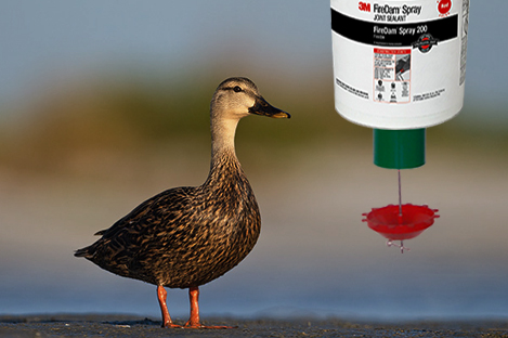 Mottled Duck Using Automatic Duck Feeder