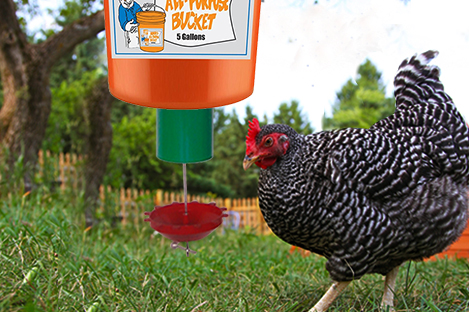 plymouth-rock-automatic-chicken-feeder